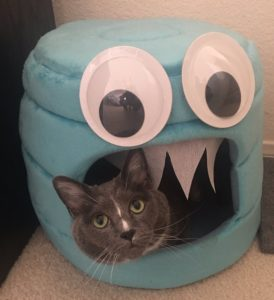 Googley-Eyed Cat Furniture
